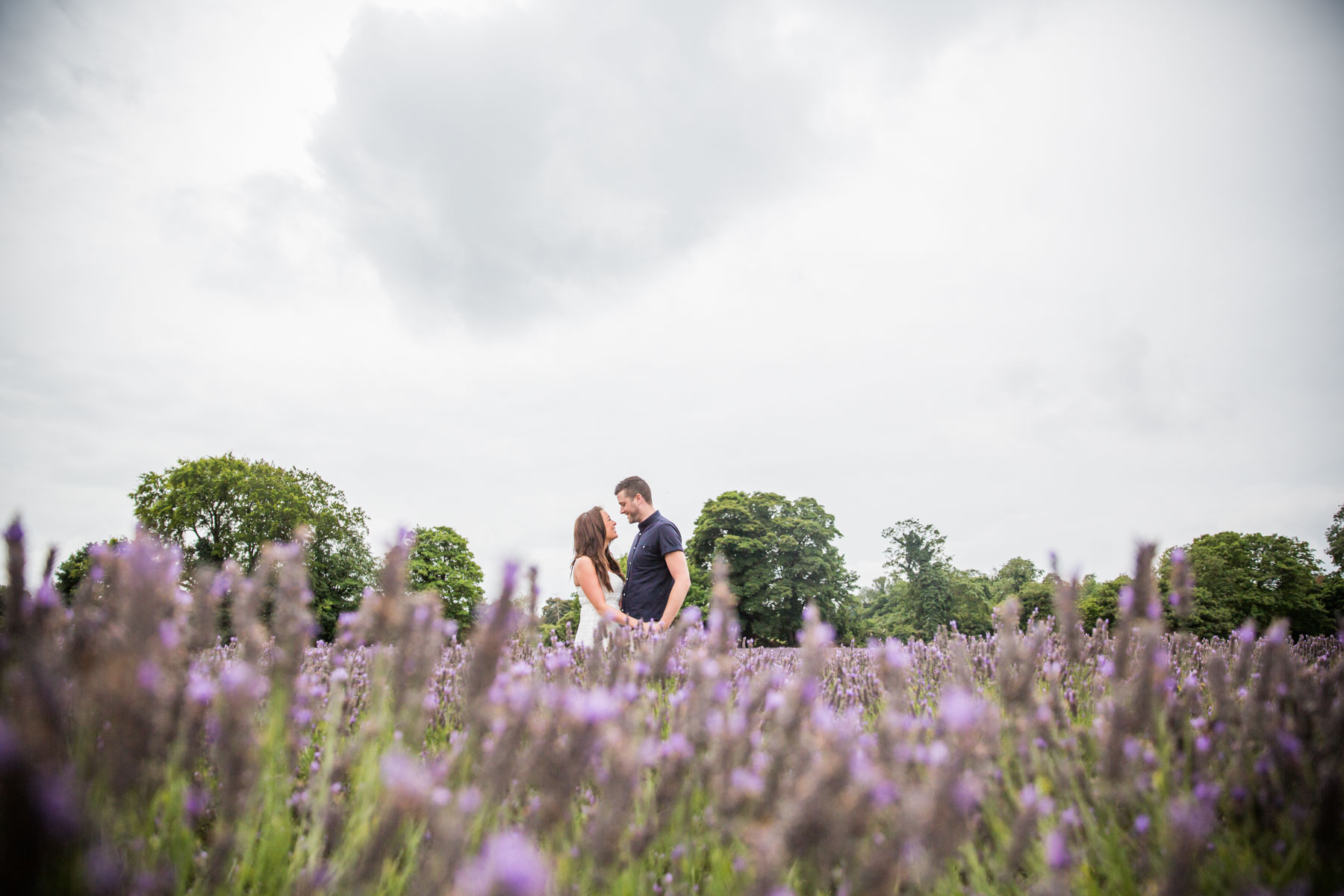 Mayfield Lavender Farm Engagement Photography