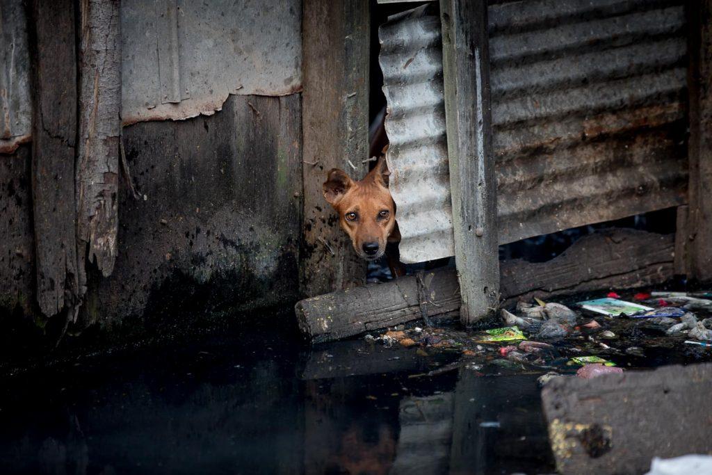 Dogs Trust NGO Photography Sri Lanka Asia